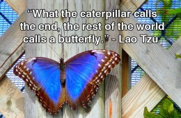 The Butterfly Quote by Lao Tzu