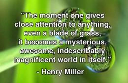 indescribably-magnificent-quote-henry-miller