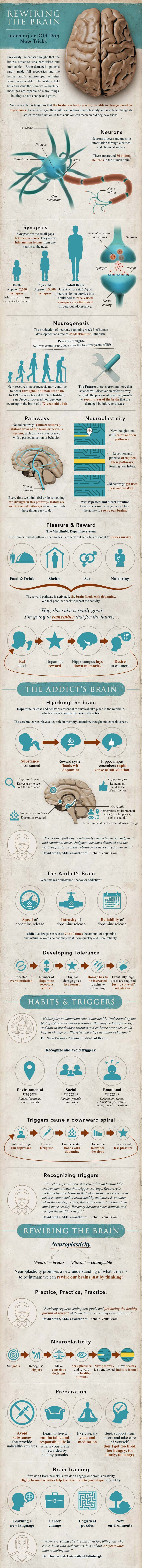 Learning and neuroplasticity infographic