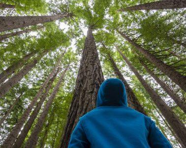 Rewilding Forest Ecology